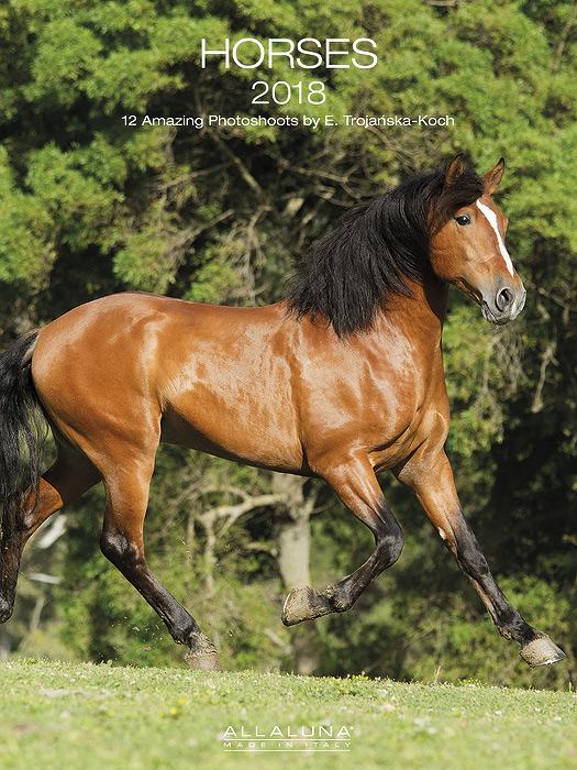 Kalendarz konie