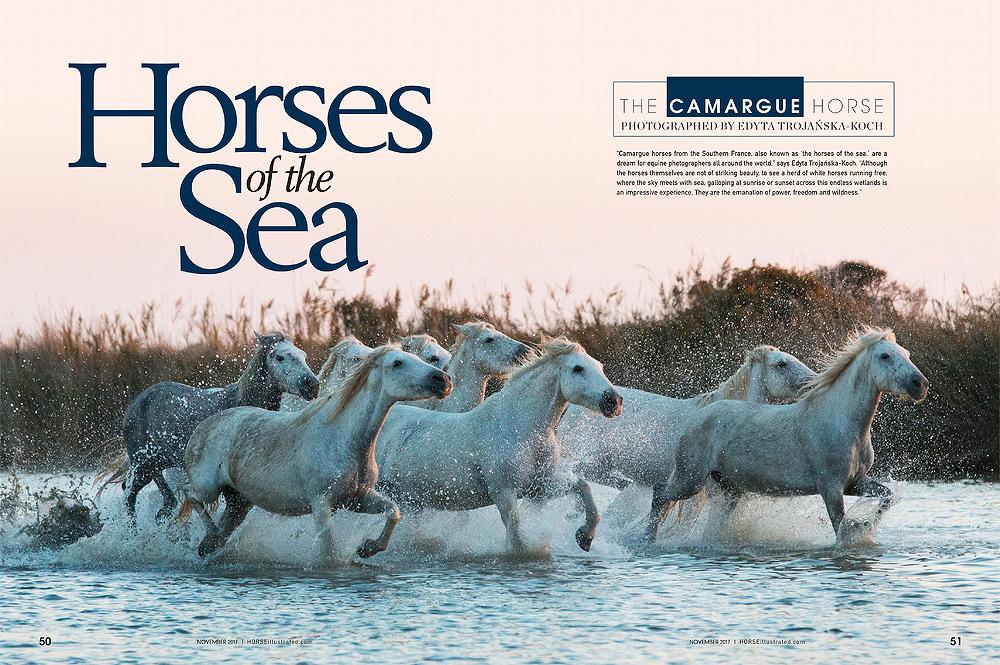 Horse Illustrated November 2017 Camargue horses