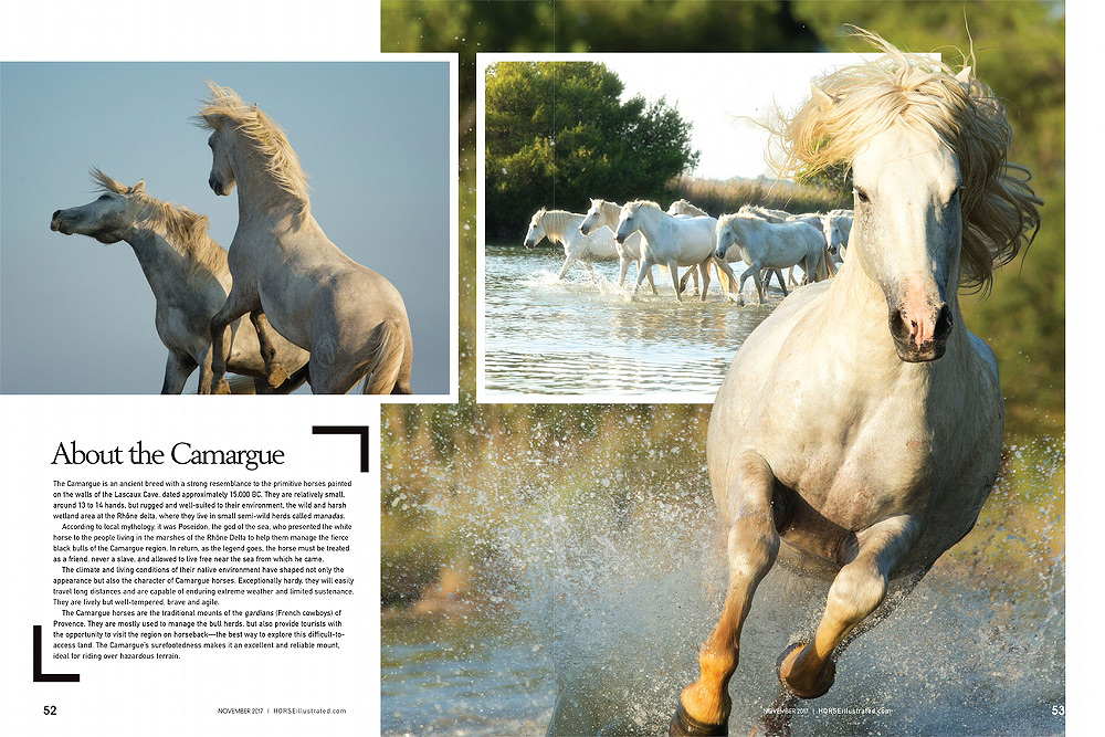 Horse Illustrated Camargue