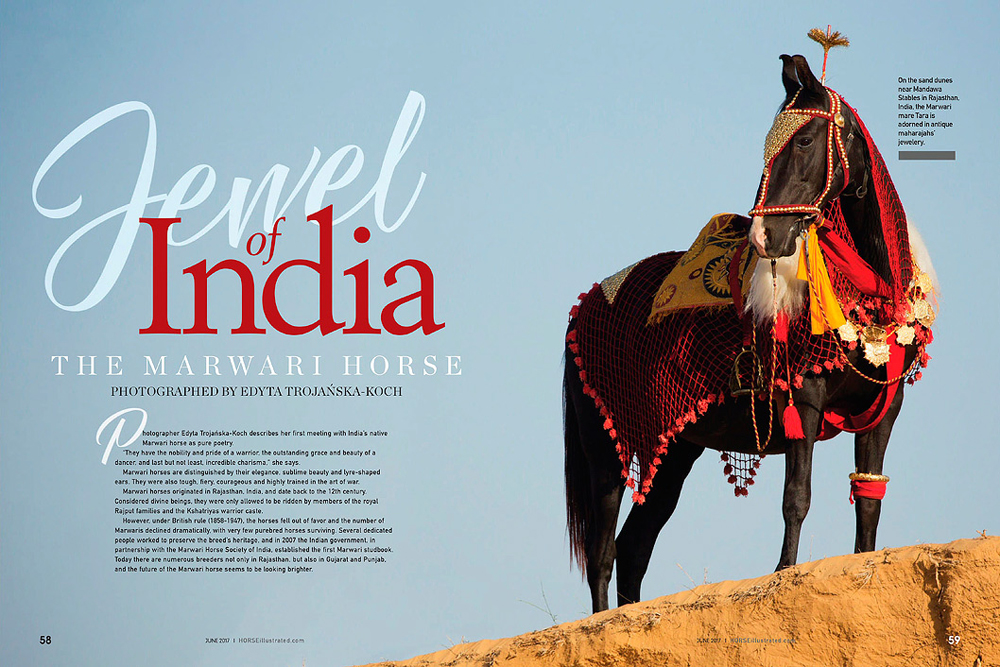 Horse Illustrated Marwari