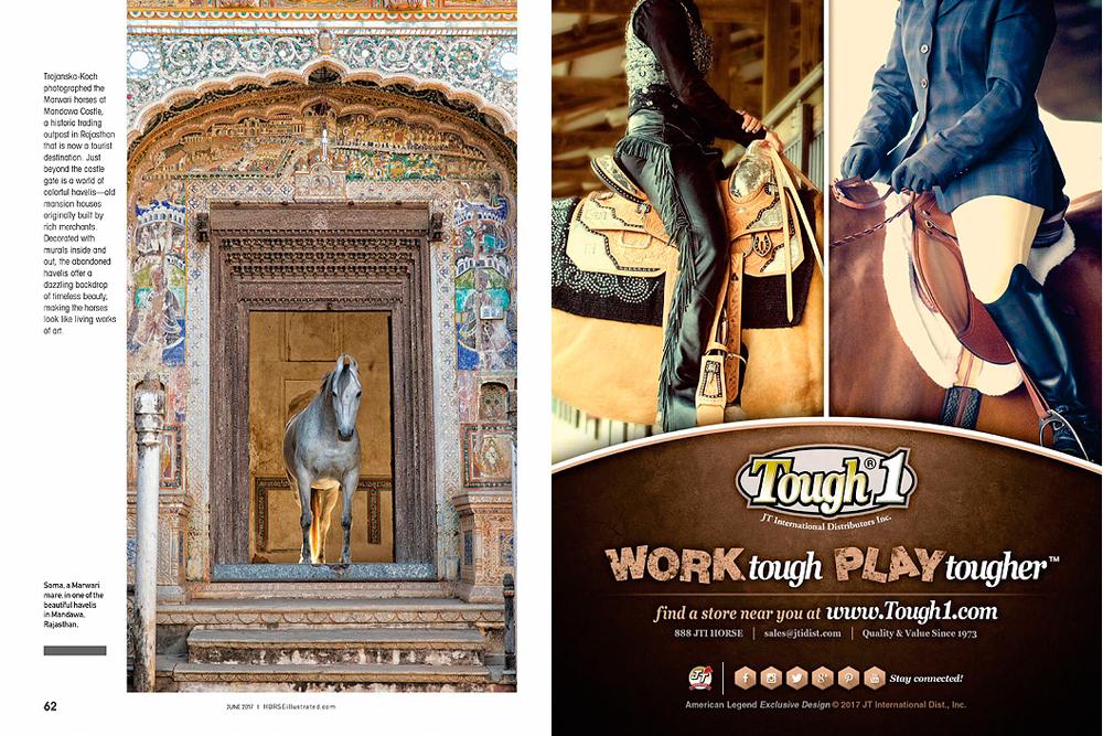 Horse Illustrated Marwari