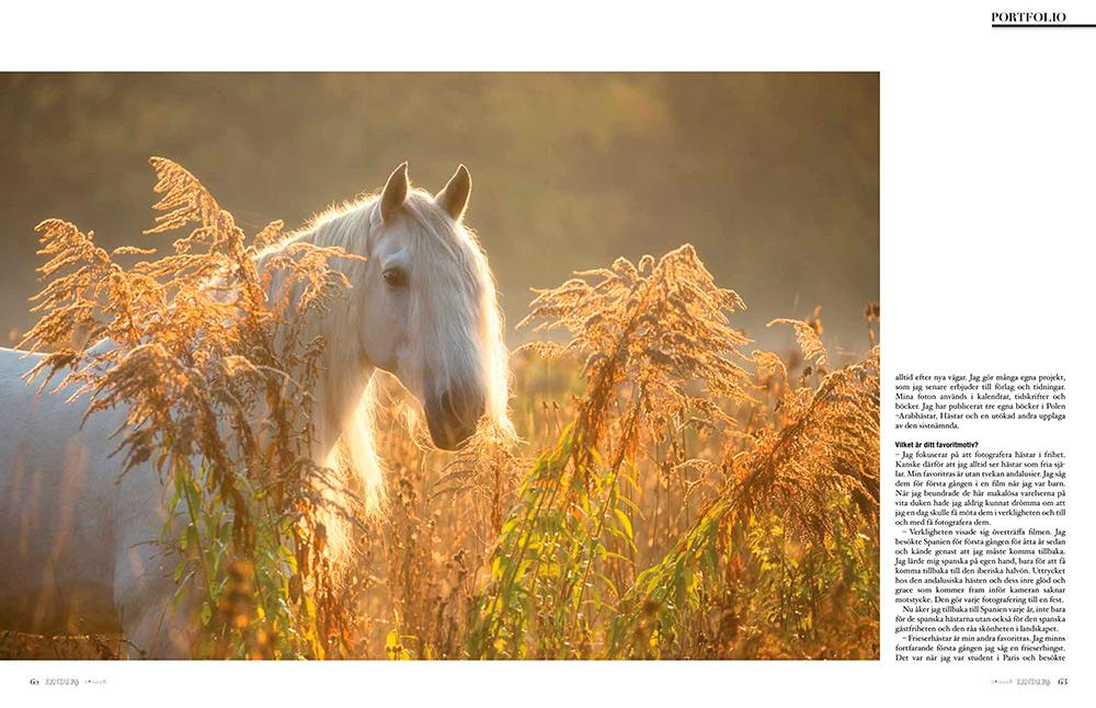 Kentaur szwedzki magazyn jeździecki
