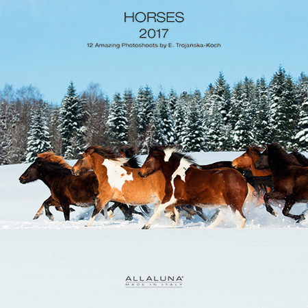 Cover of Allaluna horses 2017 calendar