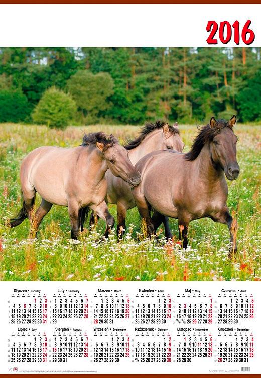 2016 calendar with Konik Polski horses