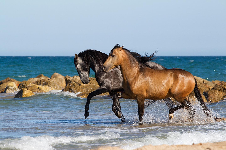 andaluzy-klus-morze-plaza-wiosna-hiszpania