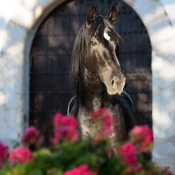Portret karego andaluza bramy wśród kwiatów