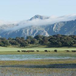 Klacze andaluzyjskie na pastwisku nad wodą na tle gór