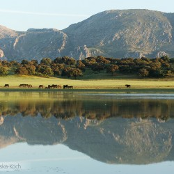 Stado andaluzów pasące się nad brzegiem jeziora w górach Hiszpanii zdjęcia koni