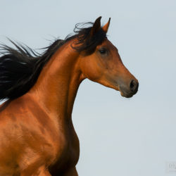 Portrait of an Arabian against the sky
