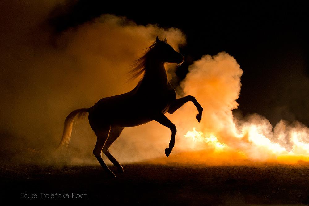 Ogier arabski stający dęba w nocy na tle dymu i ognia