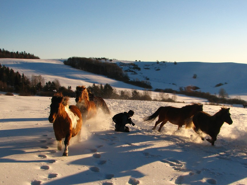 Photo session with a herd of Huzul horses in Bieszczady mountains