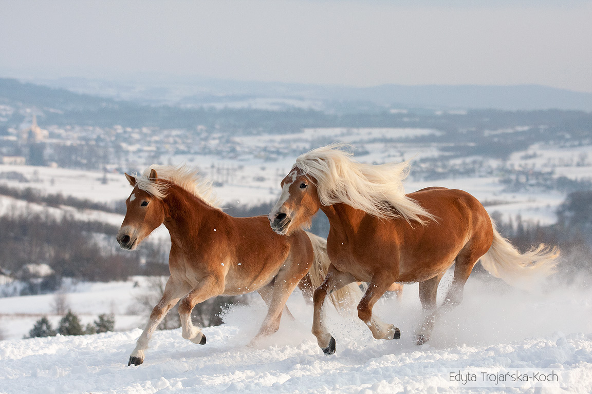 Resultado de imagen para caballos hermosos