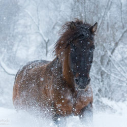 Portret hucuła w śnieżnej zamieci