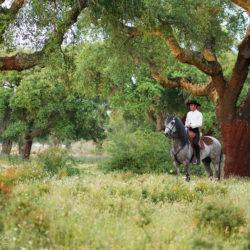Jeździec na ogierze lusitano Hindu da Amoreira wśród dębów korkowych