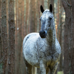 Autumn portrait of half-bred mare in the forest