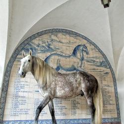 Ogier lusitano Guizho na tle azulejos