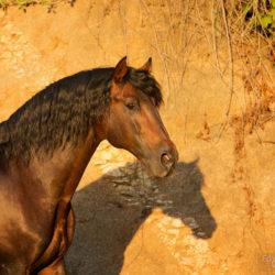 Portret andaluza na tle piasku