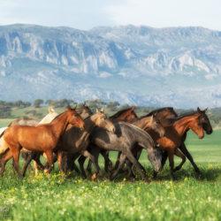 Stado ogierków andaluzyjskich w górach