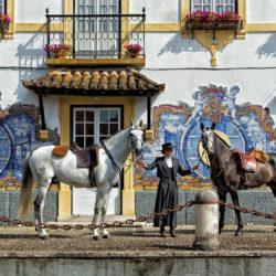 Ogiery lusitano przed fasadą winnicy w Portugalii