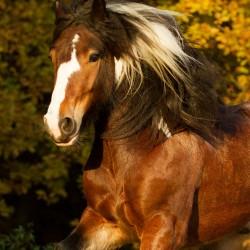 Jesienny portret tinkera na tle kolorowego lasu