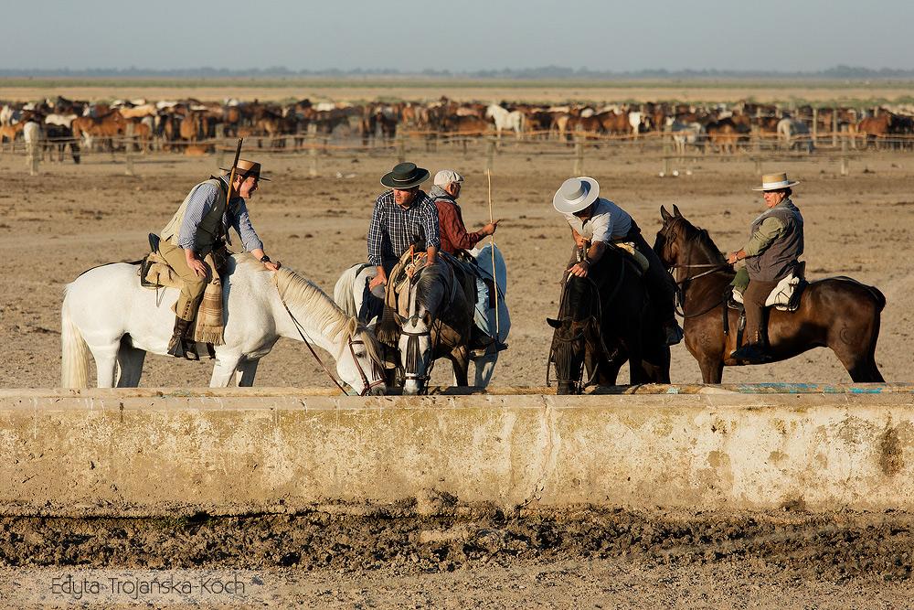 pojenie konie jeźdźcy spęd Andaluzja Hiszpania