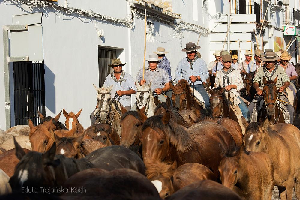 Jeźdźcy i konie podczas spędu na ulicach andaluzyjskiego miasteczka