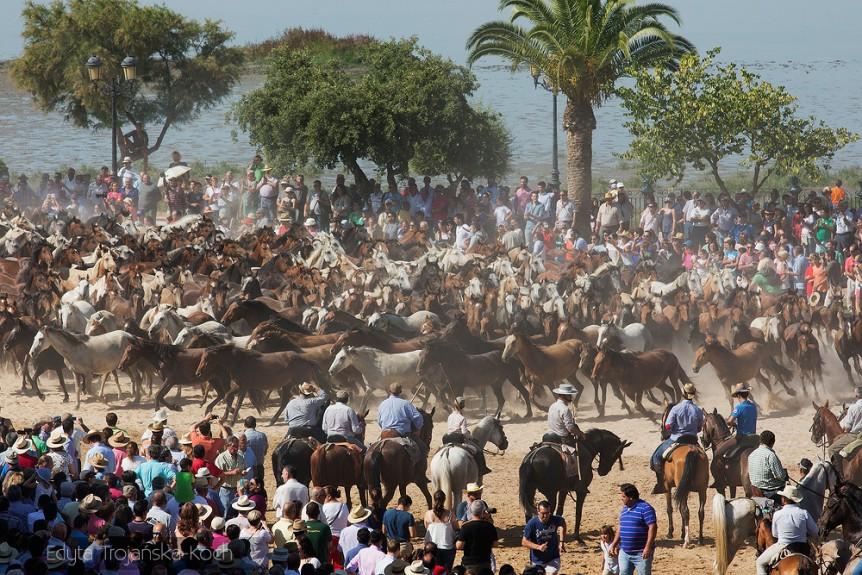 Spęd koni w Andaluzji w Hiszpanii
