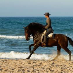 Jeździec doma vaquera galopujący na andaluzie po plaży