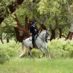 Jeździec doma vaquera galopujący na siwym andaluzie