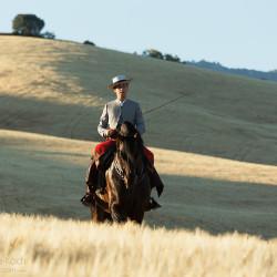 Jeździec doma vaquera na andaluzie jadący wśród zbóż