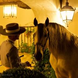 Portret ogiera andaluzyjskiego wieczorem w hiszpańskim patio