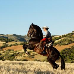 Jeździec doma vaquera na andaluzie stający dęba w górach