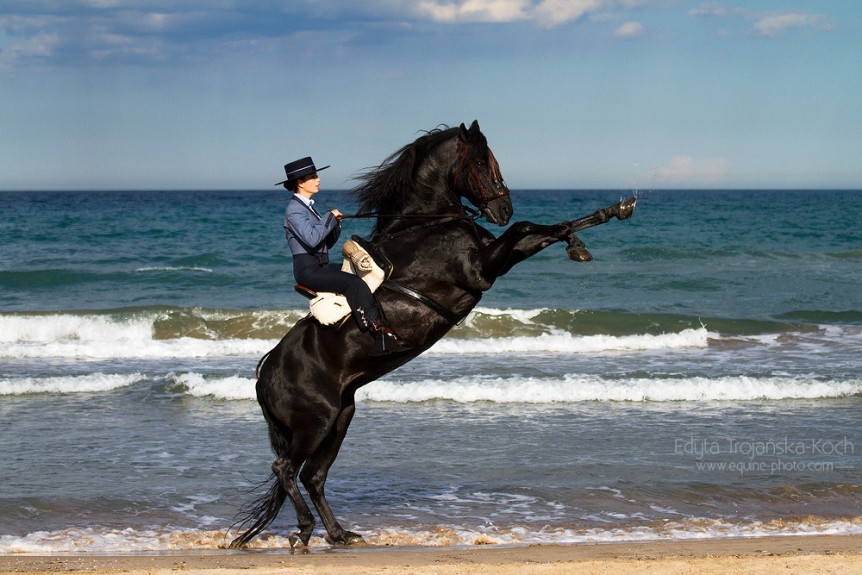 Woman rising on a black Andalusian stallion on the beach