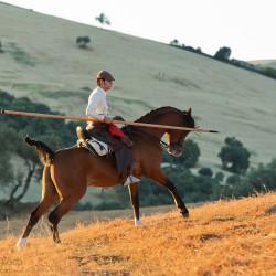 Jeździec galopujący z garrochą na arabie