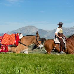 Jeździec doma vaquera na ogierze arabskim z jucznym mułem w górach
