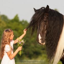 Dziewczynka z ogierem tinker i bukietem kwiatów