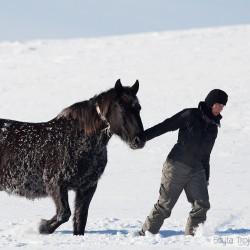 Dziewczyna prowadząca zimą oszronionego hucuła