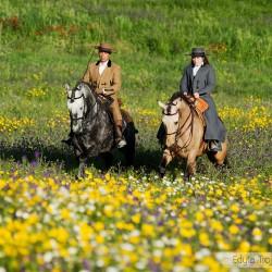 Jeździec i amazonka na ogierach lusitano wiosną na ukwieconej łące