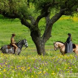 Jeździec i amazonka na koniach lusitano na kwitnącej łące