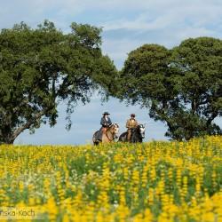 Jeździec i amazonka spacerujący na koniech lusitano po ukwieconej łące