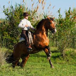 Jeździec doma vaquera galopujący na ogierze andaluzyjskim