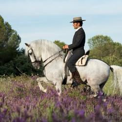 Jeździec doma vaquera w piafie na ogierze andaluzyjskim wśród kwiatów