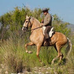Jeździec doma vaquera w piafie na izabelowatej klaczy andaluzyjskiej