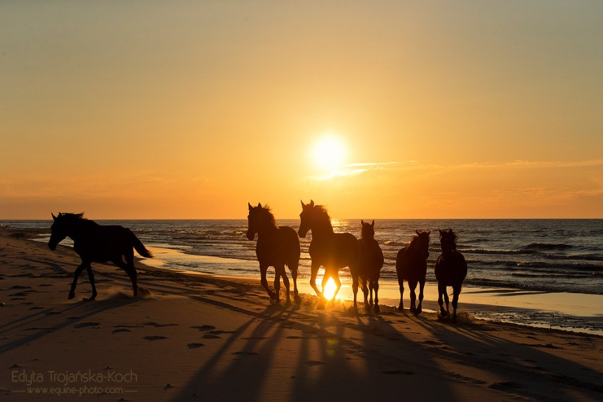 Horses trotting on the beach at sunset