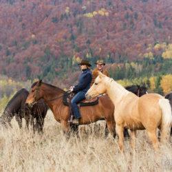 Kowboje ze stadem koni jesienią w górach
