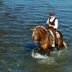 Jeździec na ogierze lusitano w rzece