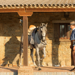 Jeździec i ogier andaluzyjski na ganku domu