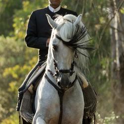 Portret jeździeca doma vaquera galopujący na siwym ogierze andaluzyjskim