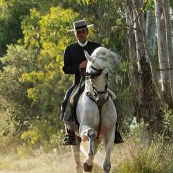 Jeździec doma vaquera galopujący na siwym ogierze andaluzyjskim