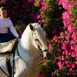 Portret amazonki doma vaquera na siwym ogierze andaluzyjskim na tle kwiatów
